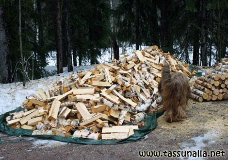 Paljonko on motti puita
